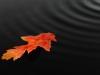 Herfstblad in water