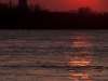 Zonsondergang Waal