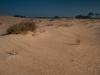 Otterlose Zand