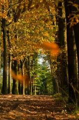 Herfst in Den Treek-Henschoten