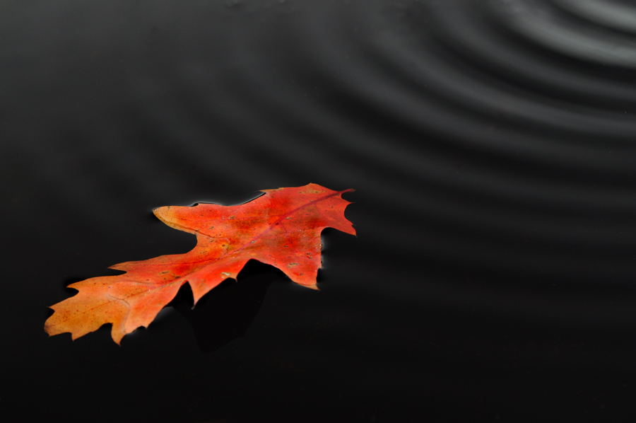 Herfstblad in water